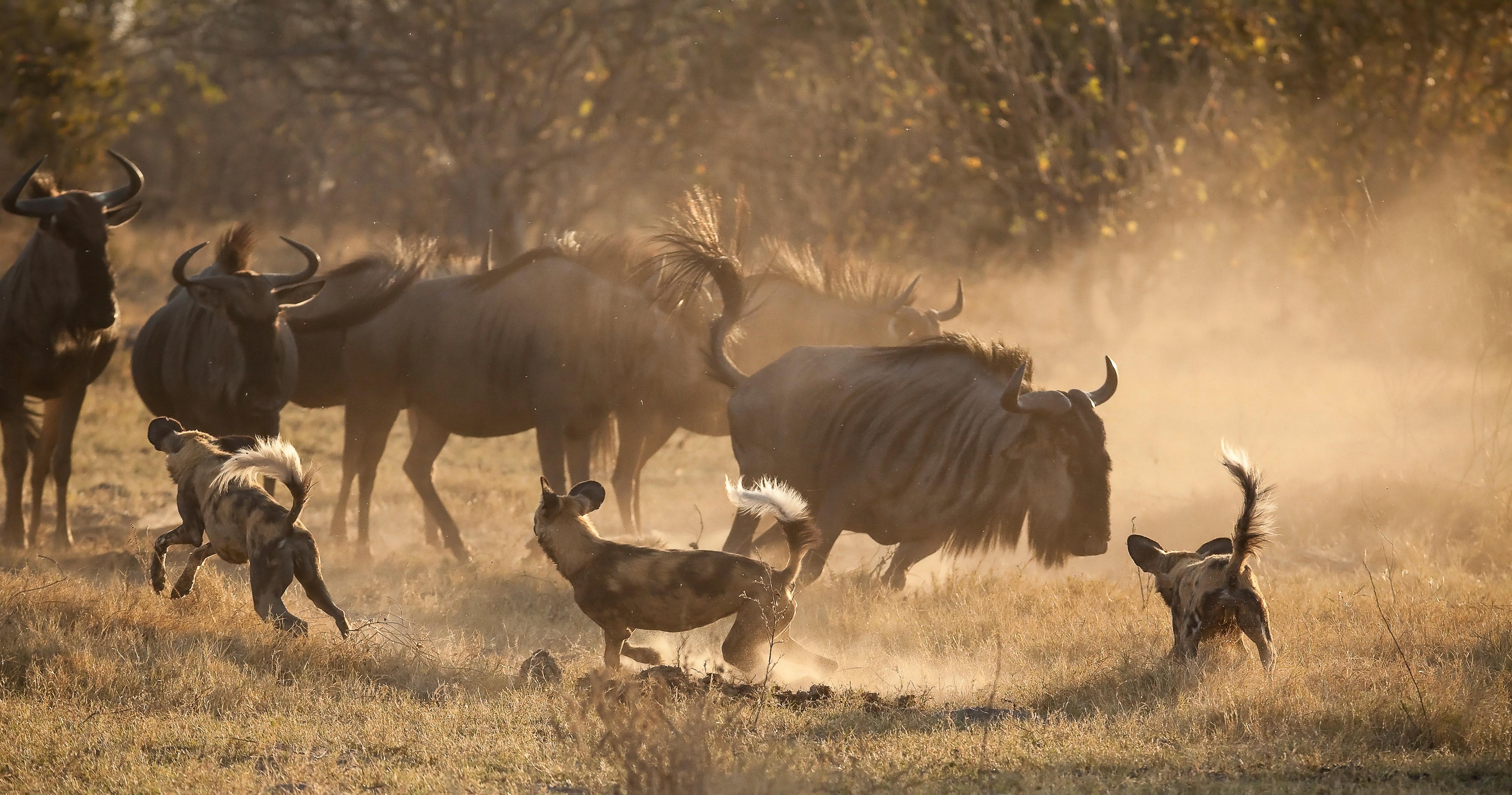 Kane Motswana ACTION 2 WEBSITE-2