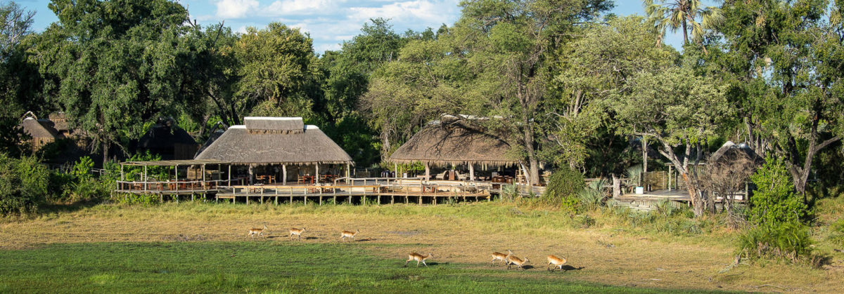 Travel To Botswana For A Safari Vacation With Safari Embassy
