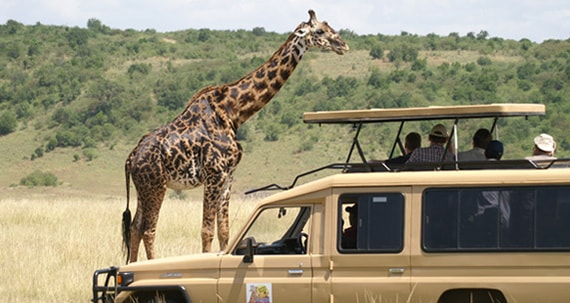 Experience The Best Photographic Safaris in Africa With Safari Embassy