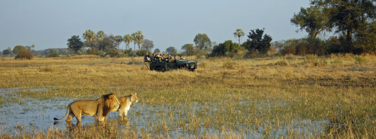 Botswana Safari: The Trip To Endless Wildlife Drama