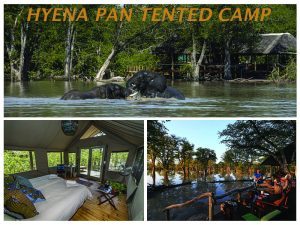 hyena pan tented camp